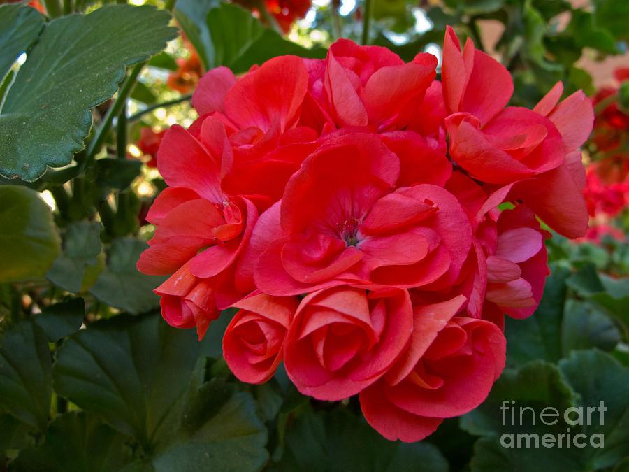 Flower Photograph - Oh My Red by Arlene Carmel