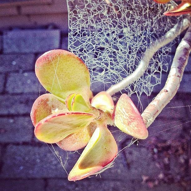 Succulent Photograph - oh What A Tangled Web We Weave...   by Karen O