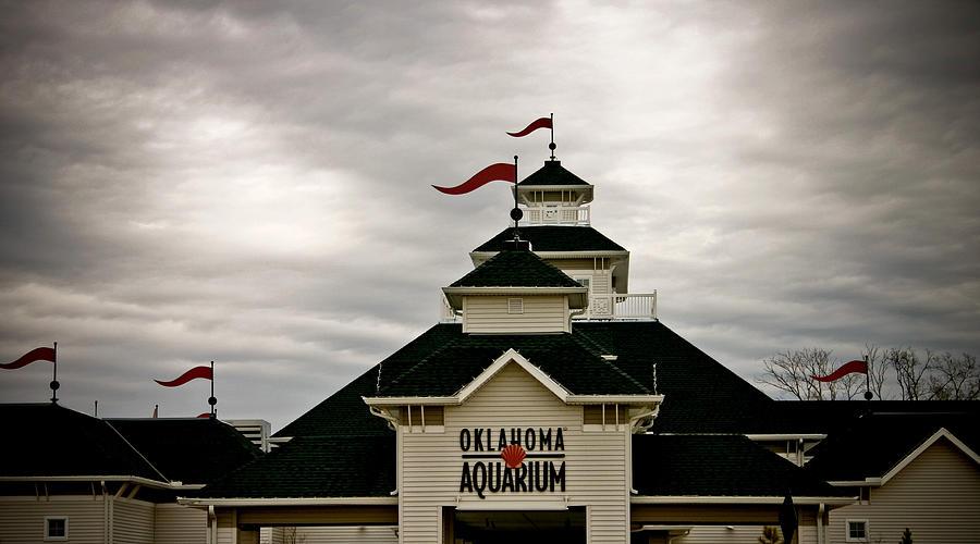 Oklahoma Aquarium Photograph - Oklahoma Aquarium by Toni Hopper