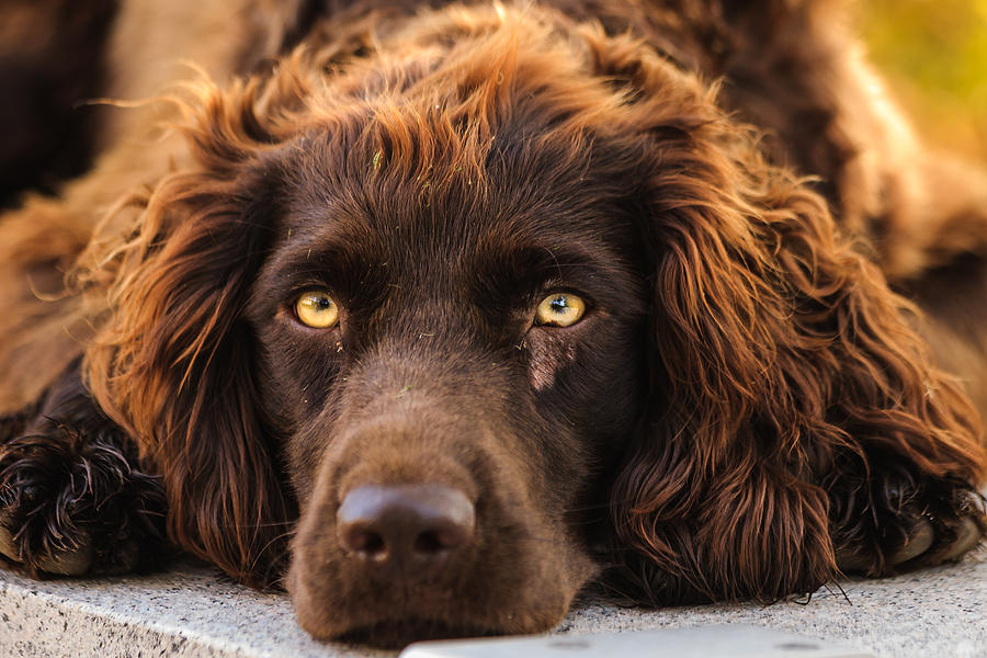 Dog Photograph - Ol Red by Keith Allen