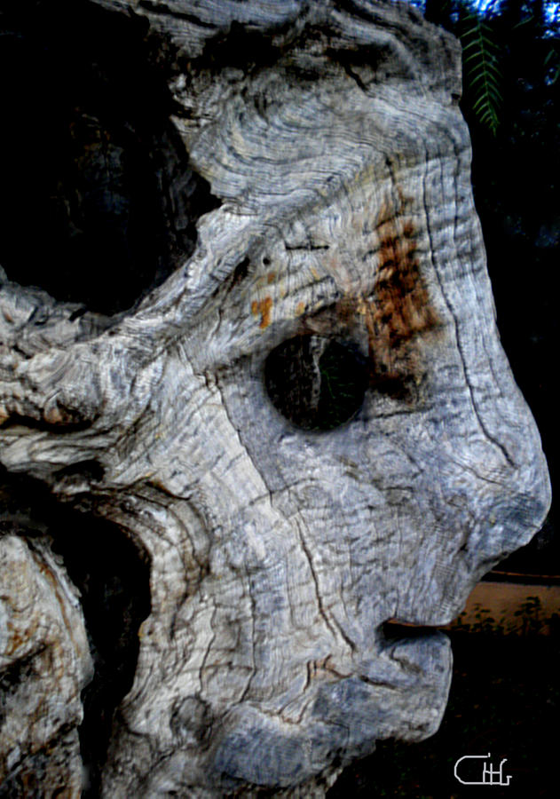 Colette Photograph - Old Ancient Olive Tree In Spain by Colette V Hera  Guggenheim