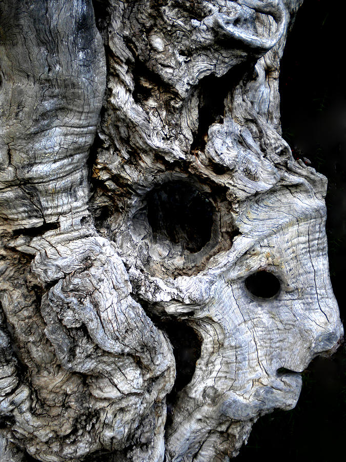 Colette Photograph - Old Ancient Olive Tree Spain by Colette V Hera  Guggenheim
