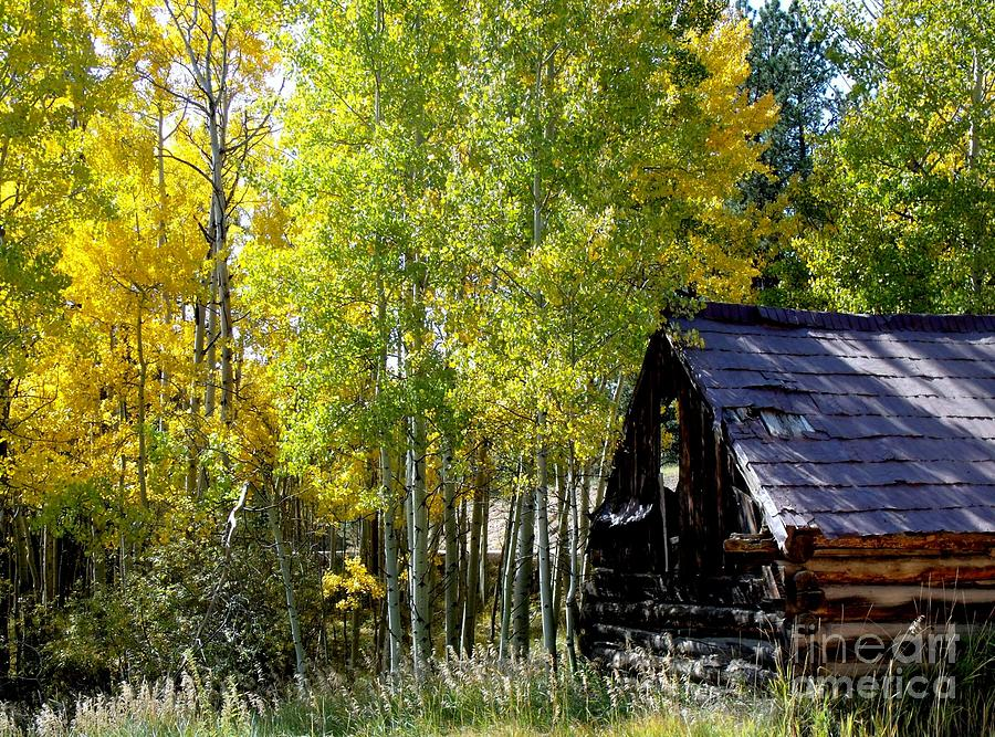 Aspens Photograph - Old Cabin In The Golden Aspens by Donna Parlow