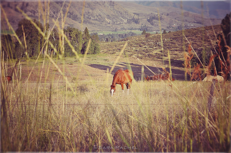 Methow Valley Photograph - Old Country Road by Sarai Rachel