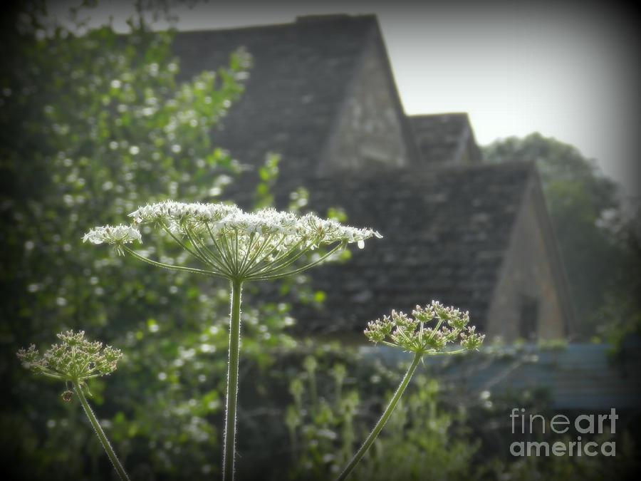 Farms Pyrography - Old Farm House by Carol  Hynes