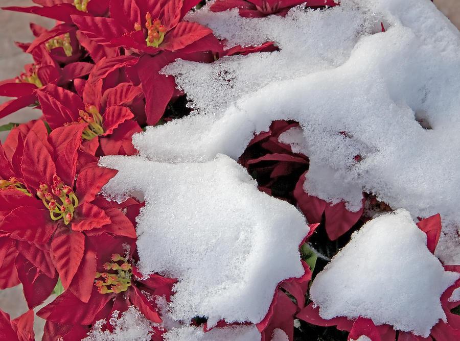 Christmas Photograph - Old-fashioned Christmas 7 - Gardener Village by Steve Ohlsen