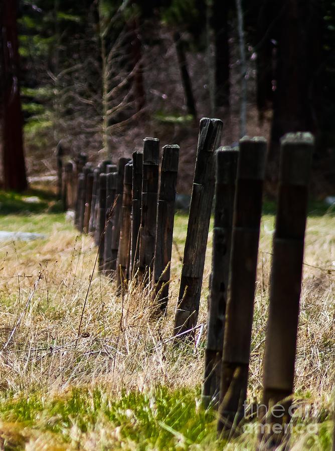 Old Fences Photograph