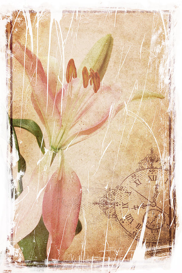 Lily Photograph - Old Greating Card by Rozalia Toth