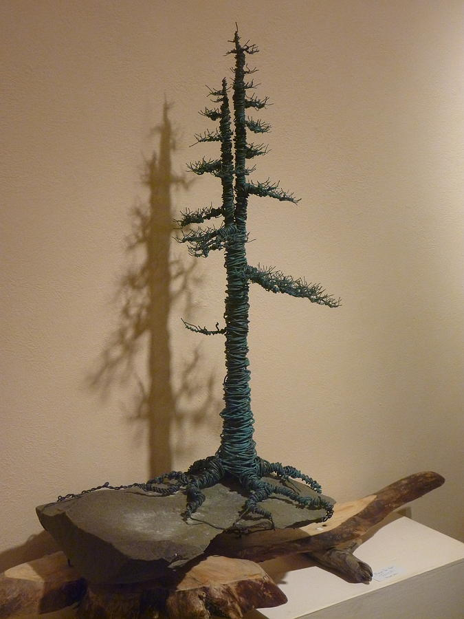 Bonsai Sculpture - Old Growth Spruce by Steven Panarelli