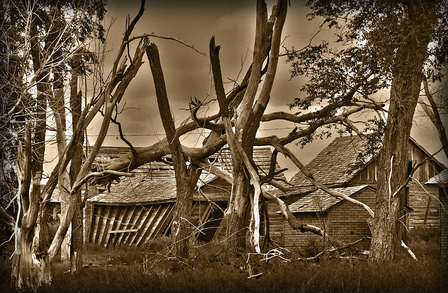 Old Photograph - Old Homestead by Shane Bechler