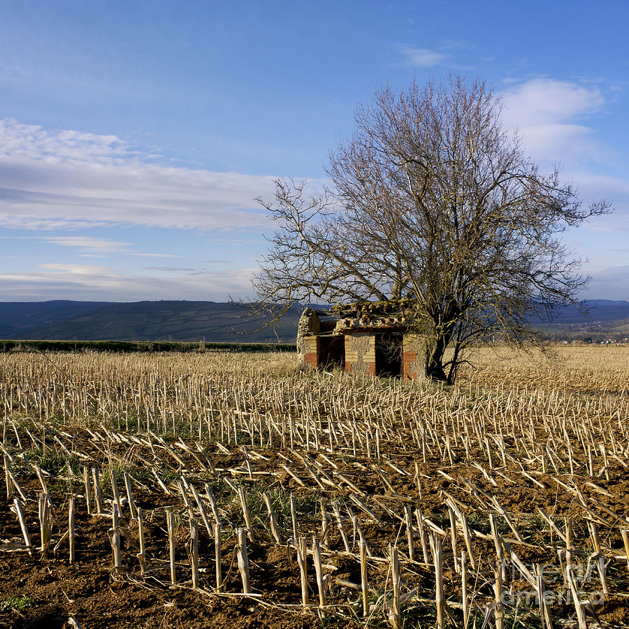 Zea Photograph - Old Hut Isolated In A Field. Auvergne. France by Bernard Jaubert