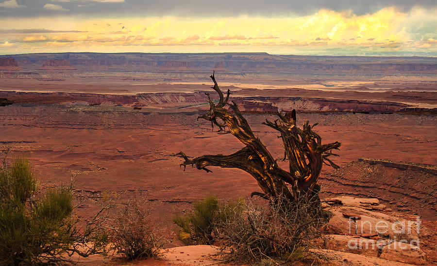 Scenic Photograph - Old One by Robert Bales