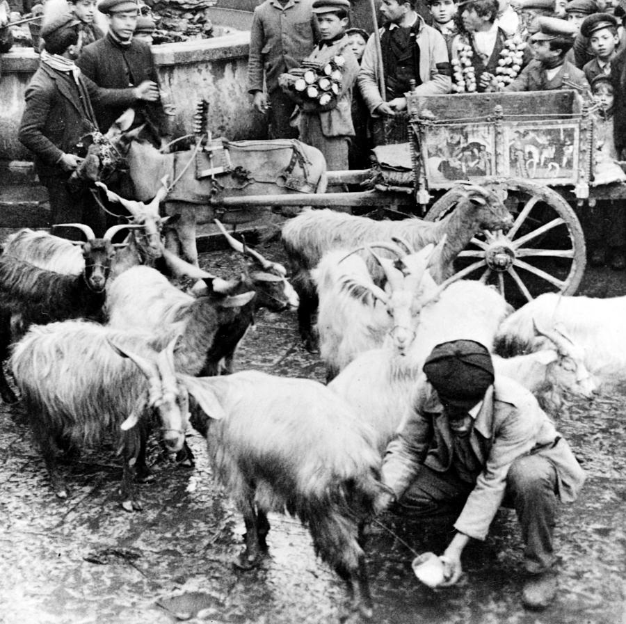 Old Photograph - Old Palermo Sicily - Goats Being Milked At A Market by International  Images