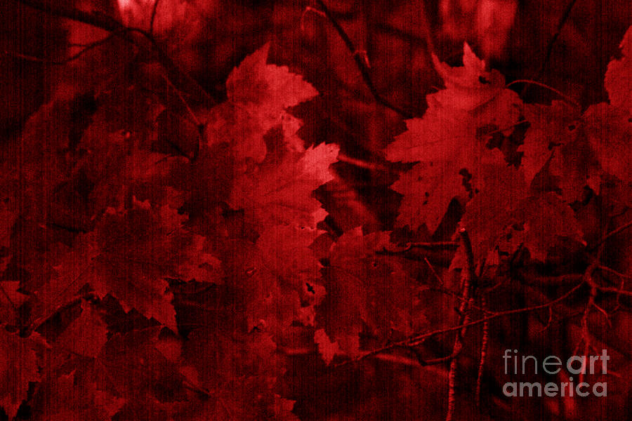 Leaf Photograph - Old Red by Marjorie Imbeau