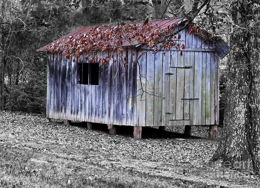 Vintage Photograph - Old Weathered Shed by Betty LaRue