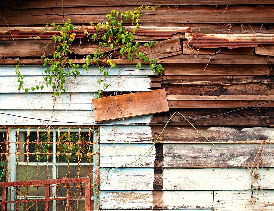 Shack Photograph - Old Wooden Shack by Yali Shi