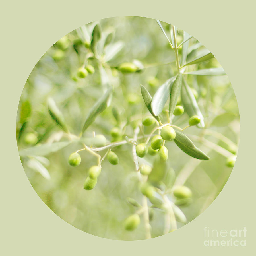 Olive Tree Photograph - Olive O by Linde Townsend