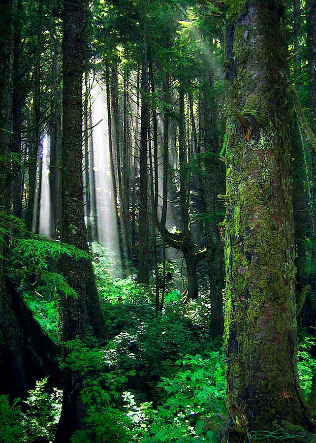 Olympic Peninsula Photograph - Olympic Forest by Ric Soulen