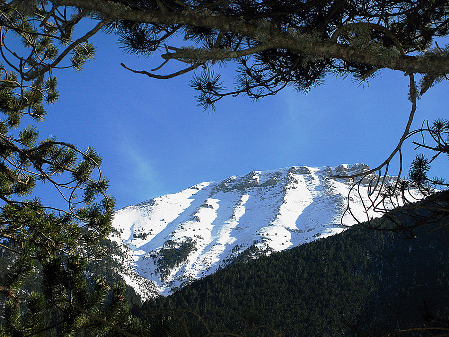 Mountain Photograph - Olympos Through Firs by Andonis Katanos