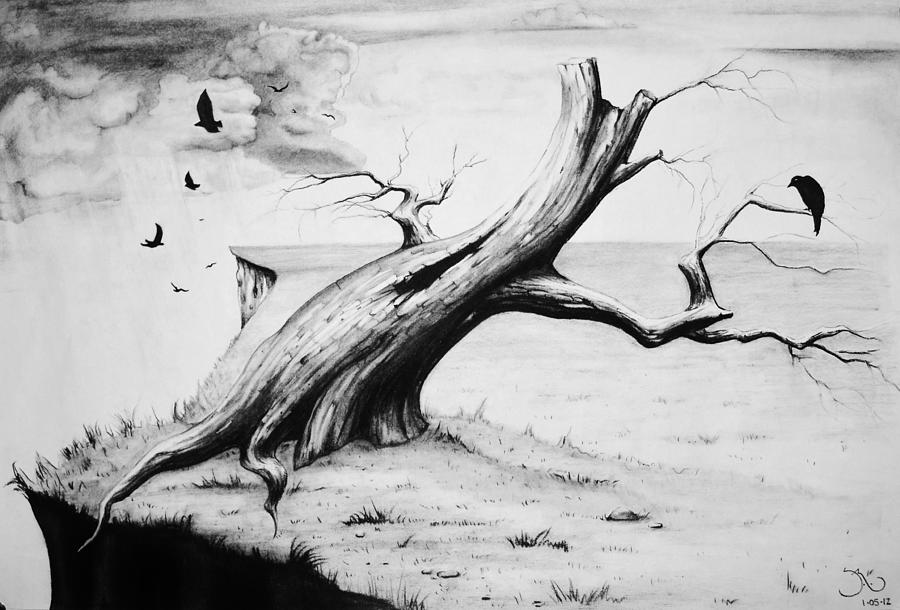 Tree Drawing - On Edge by Suzanne Roach