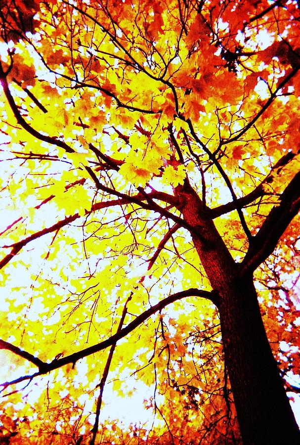 Autumn Tree Photograph - On Fire by Todd Sherlock