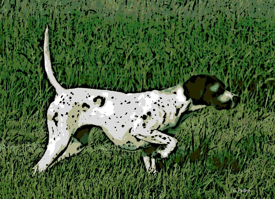 Bird Dog Photograph - On Point by George Pedro