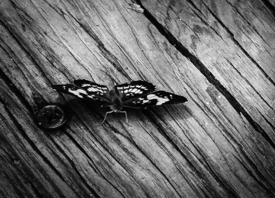 Butterfly Photograph - On The Boardwalk II by Stacy Michelle Smith