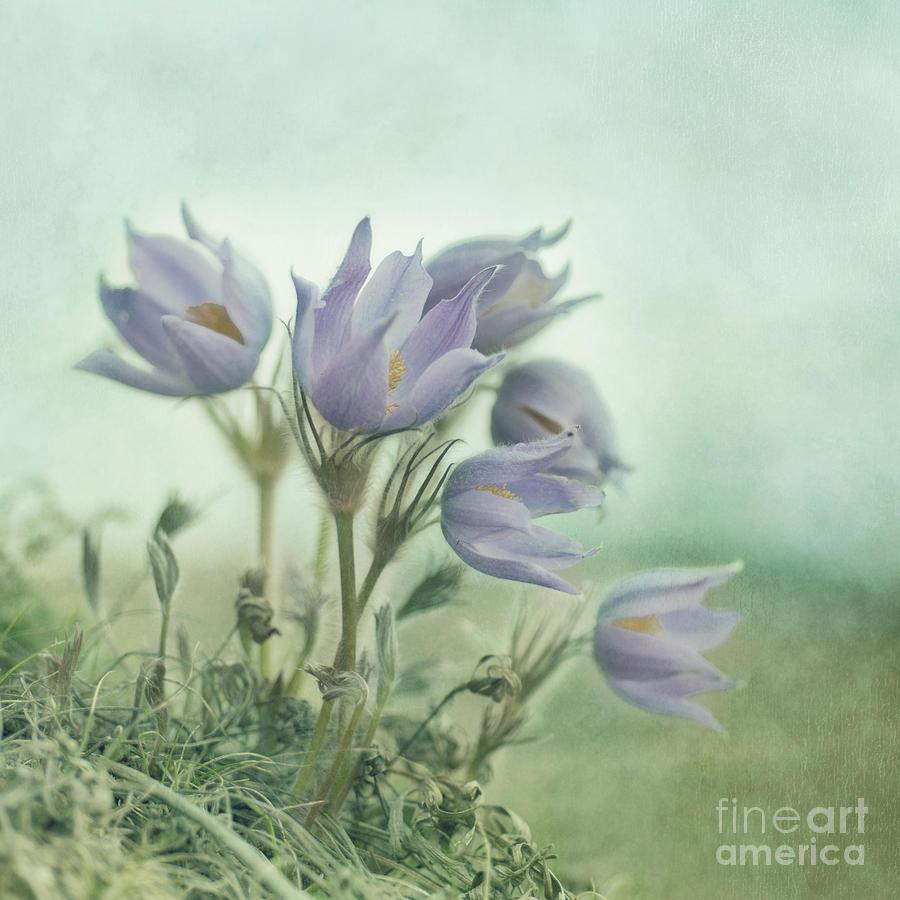 Spring Photograph - On The Crocus Bluff by Priska Wettstein