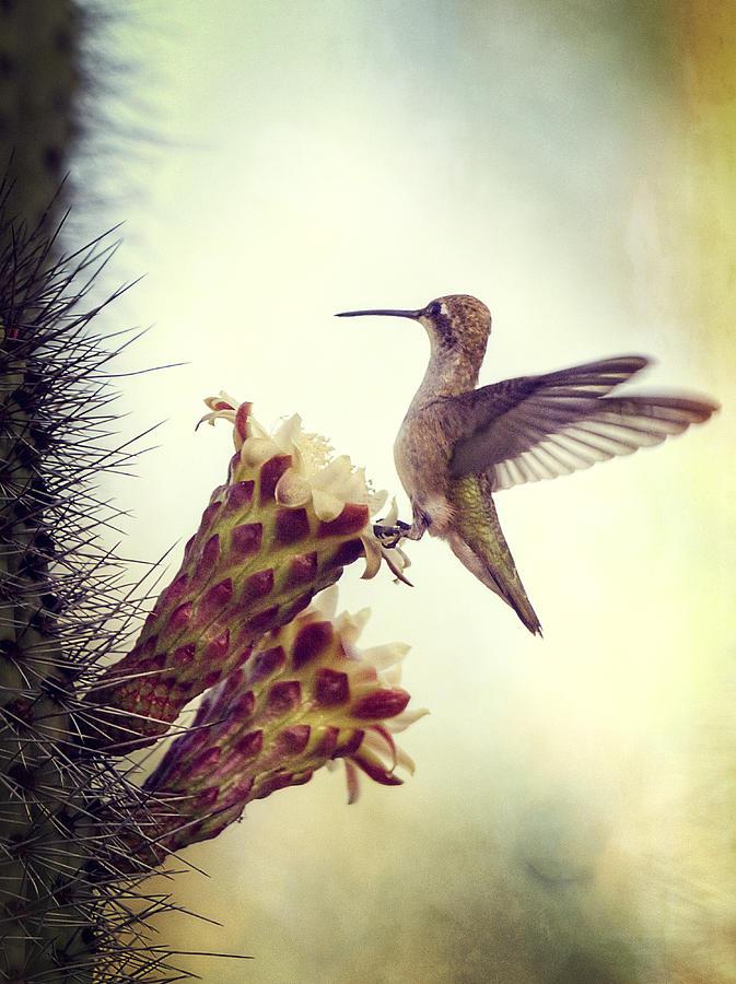 Hummingbird Photograph - On The Edge II  by Saija  Lehtonen