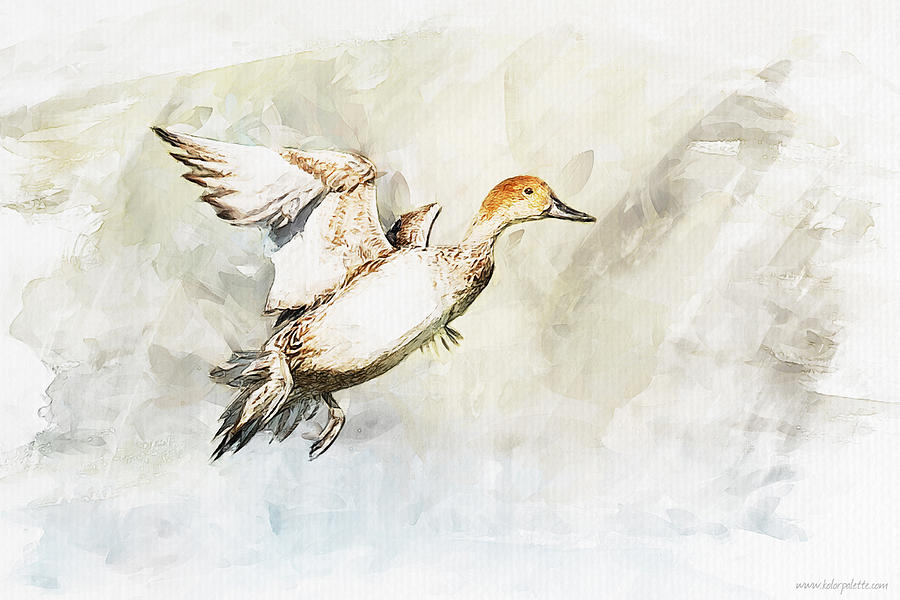 Duck Painting - On The Fly by Kolor Palette