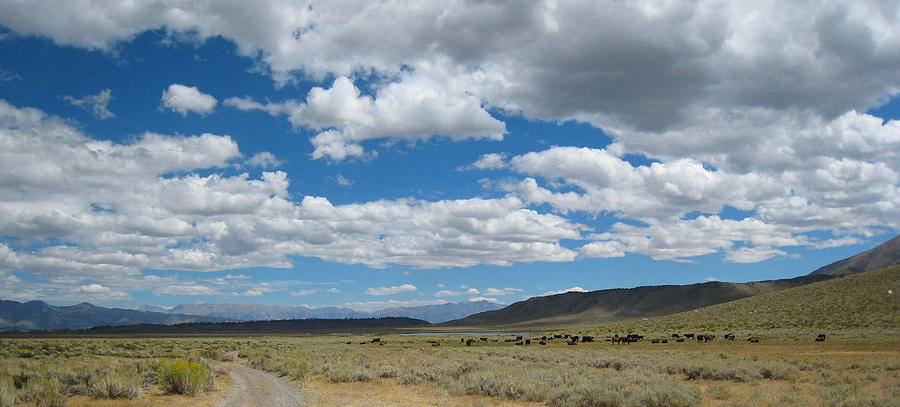 Mountains Photograph - On The Range by Kirk Williams