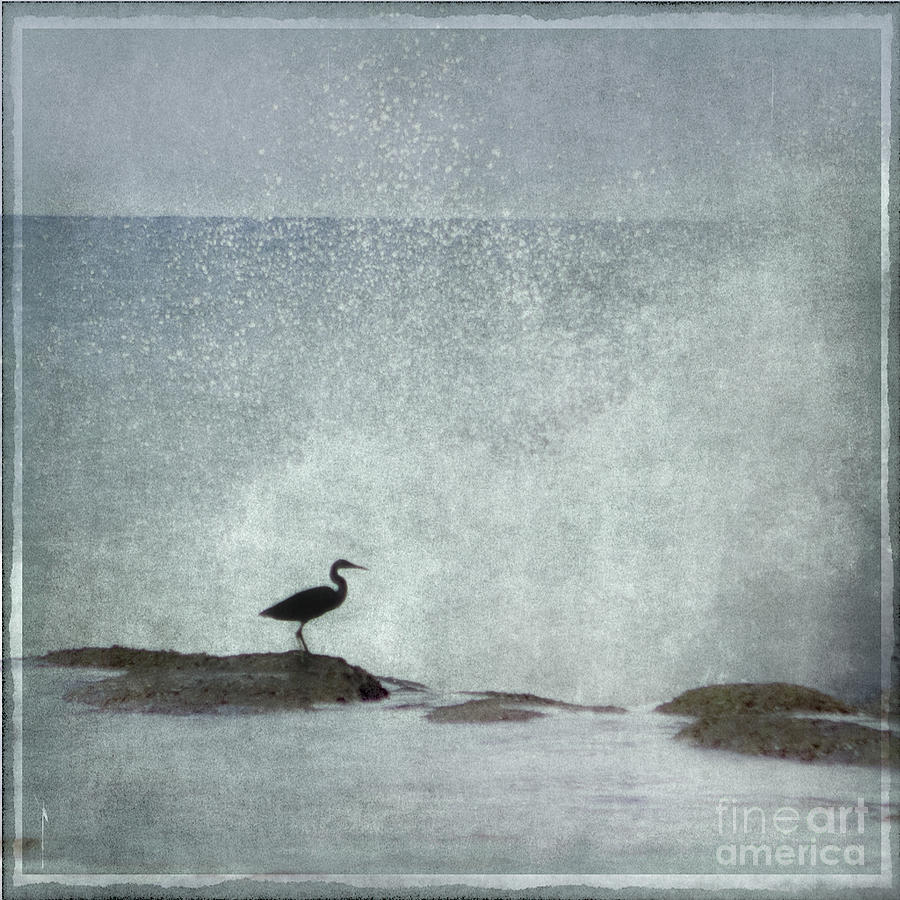 Heron Photograph - On The Rocks by Linde Townsend