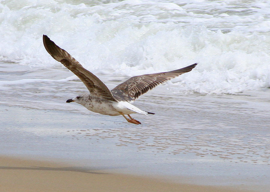 Beach Photograph - On The Wing At Nags Head by Paula Tohline Calhoun