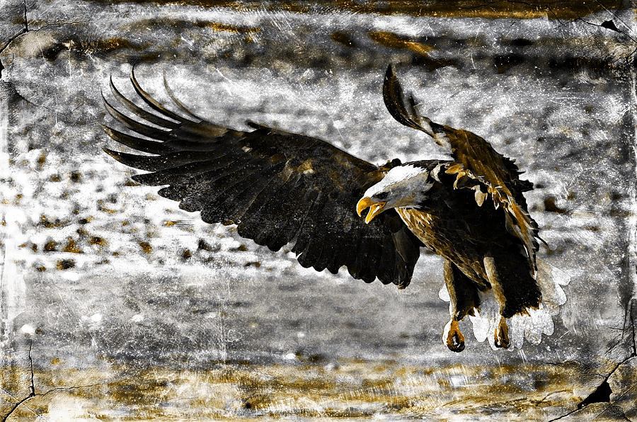 Bald Eagle Digital Art - On The Wings Of Love by Carrie OBrien Sibley
