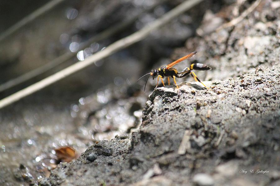Insect Photograph - On Top Of The Mountain  by Amy Gallagher