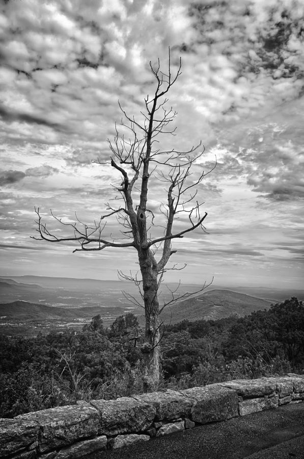 Forest Photograph - On Top Of The World by Guy Whiteley
