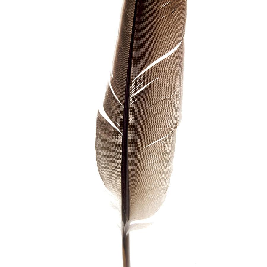 Square Photograph - One Feather by Bernard Jaubert