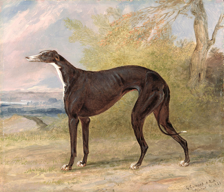 One Painting - One Of George Lane Foxs Winning  by George Garrard