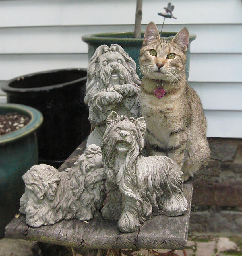 Cat Photograph - One Of These Things Is Not Like The Other by Tina Ann Byers