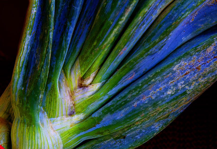 Nature Photograph - Onions by Michael Friedman