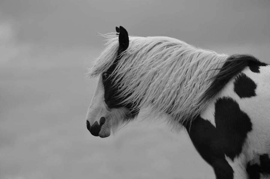 Horse Photograph - Only The Wind Spoke Of Softness by Studio Yuki