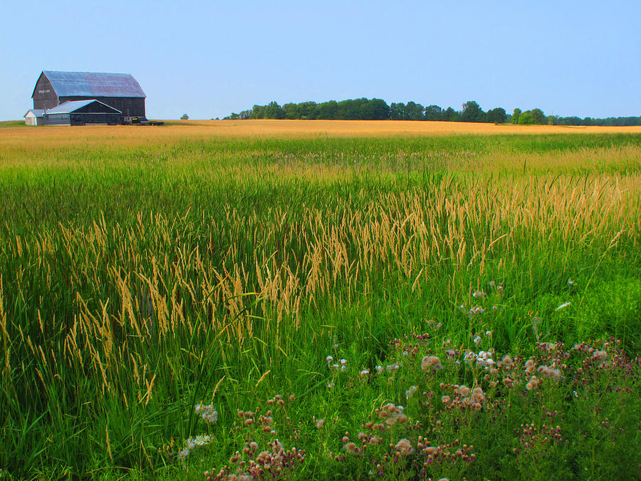Landscape Photograph - Ontario Farm  by Lyle Crump