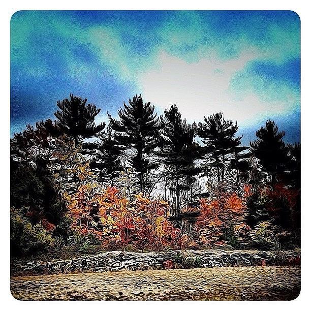 Fall Photograph - Ontario by Natasha Marco
