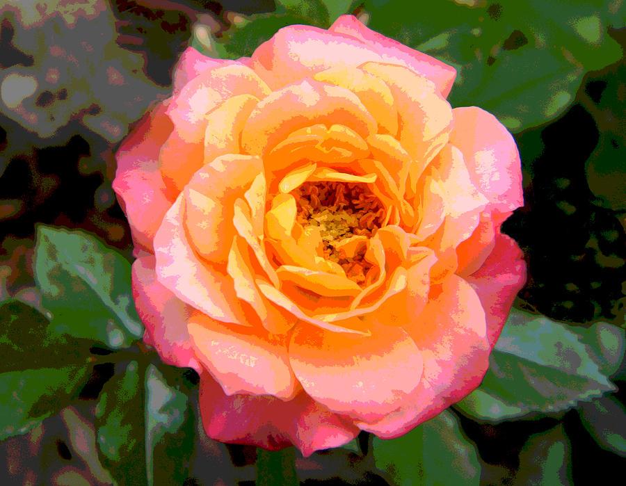 Pink and Orange Wallpaper - WallpaperSafari   Orange And Pink Roses
