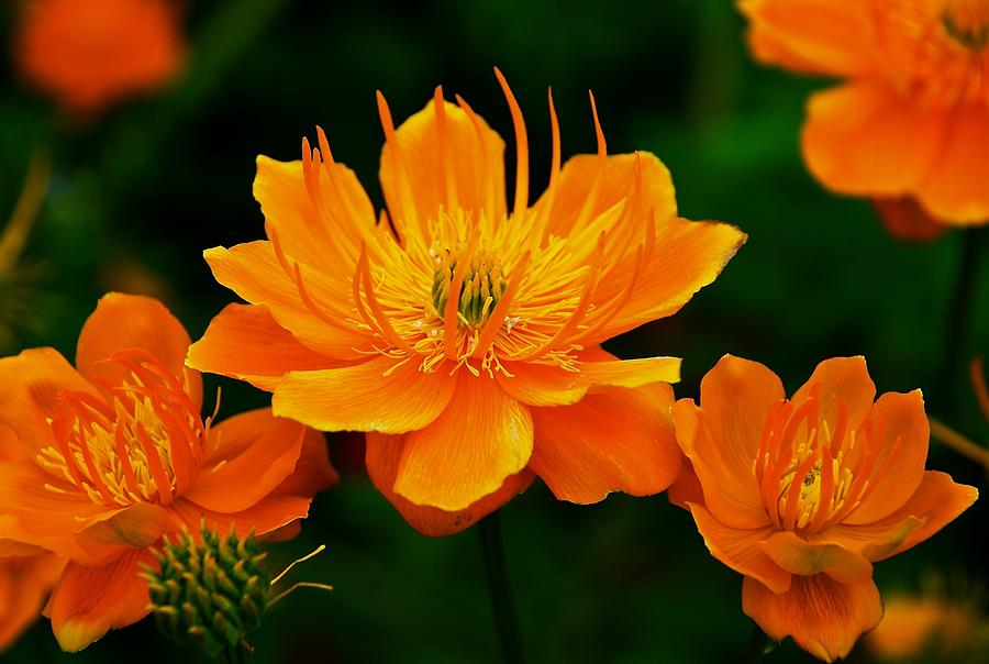 Flowers Photograph - Orange And Yellow by Eric Tressler