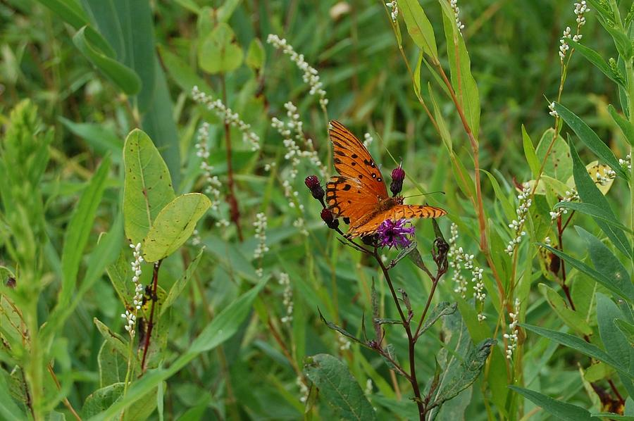 Butterfly Photograph - Orange Butterfly by Beverly Hammond