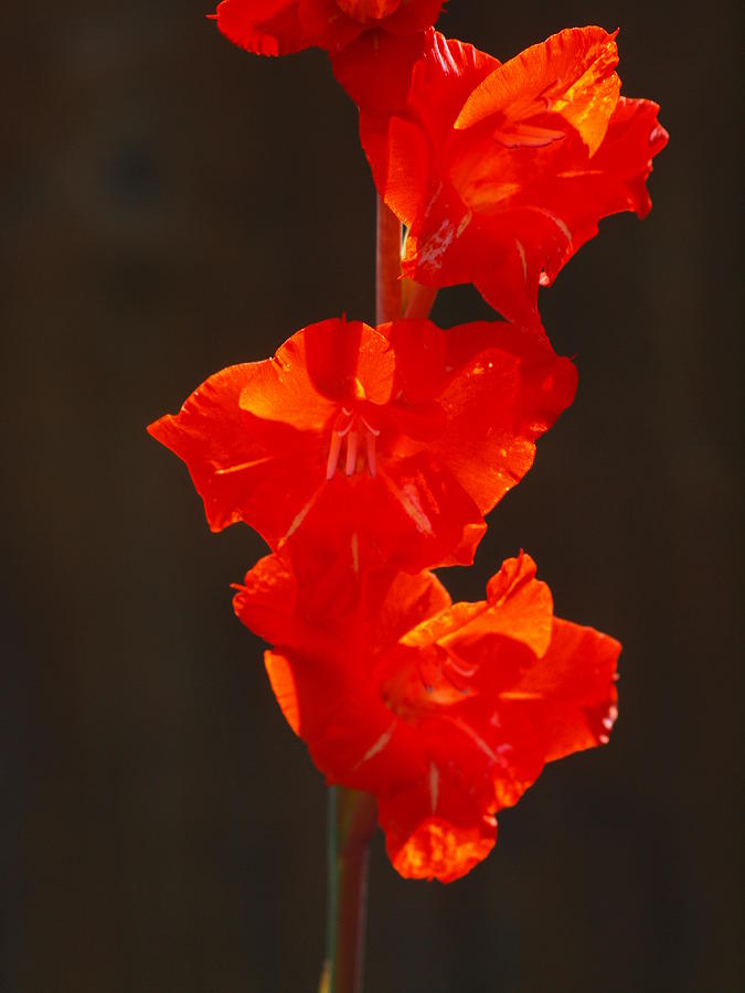Flower Photograph - Orange Fire by Jim Moore