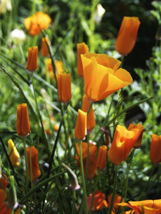 Floral Photograph - Orange by Jayne Howard