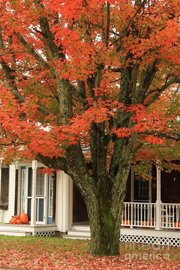 Autumn Photograph - Orange Leaves And Pumpkins by Deborah Benoit