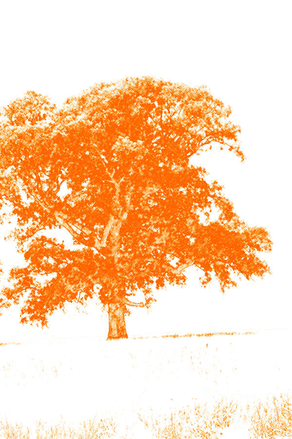 Backdrop Photograph - Orange Oak by Alan Look